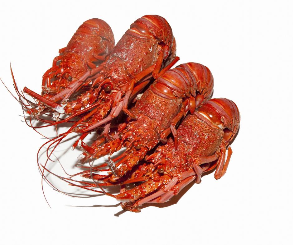 Rock-lobsters